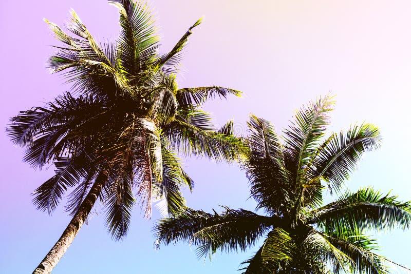 Corona mullida de la palmera en fondo soleado del cielo azul Foto entonada rosada romántica imágenes de archivo libres de regalías