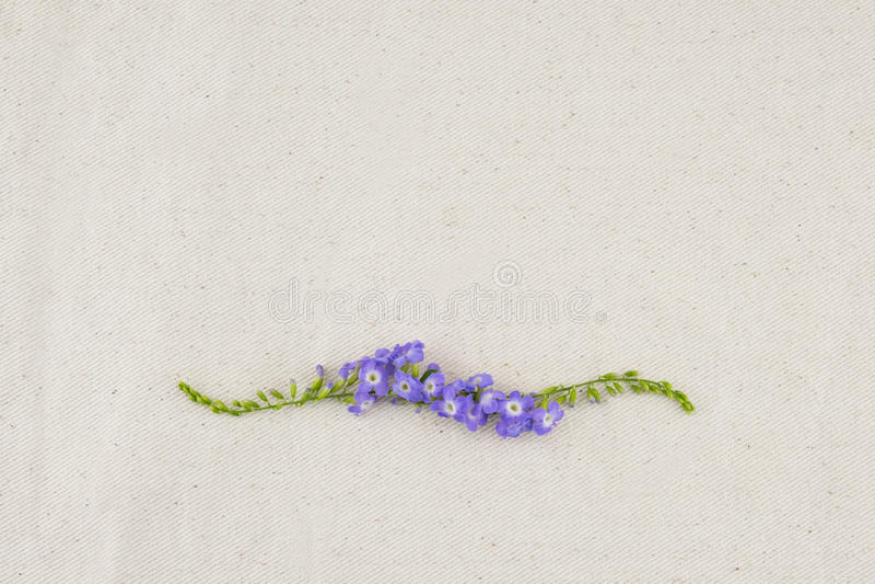 Corona porpora dei fiori fotografia stock libera da diritti