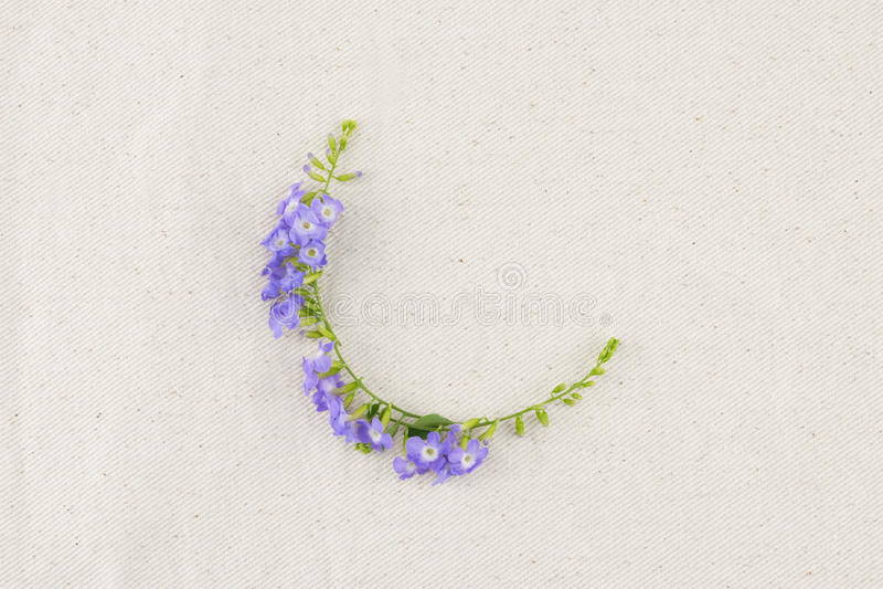Corona porpora dei fiori immagini stock
