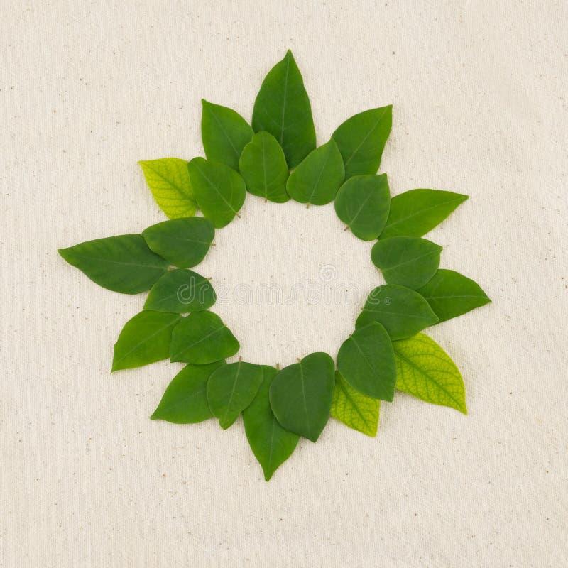 Corona rotonda delle foglie verdi immagine stock libera da diritti