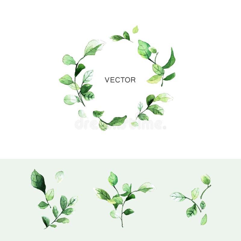 Corona verde della foglia di vettore con il posto per testo e l'insieme dei rami con le foglie nello stile dell'acquerello illustrazione vettoriale