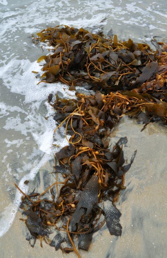 Download Coronado Island Silver Strand Beach Stock Photo - Image: 36804016