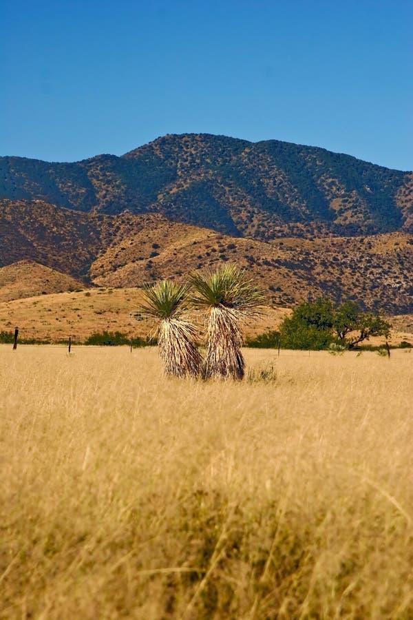 coronado parkowy stan zdjęcie stock