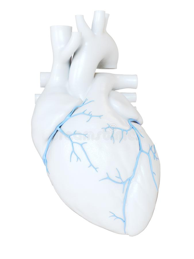 The coronary veins. 3d rendered medically accurate illustration of the coronary veins royalty free illustration