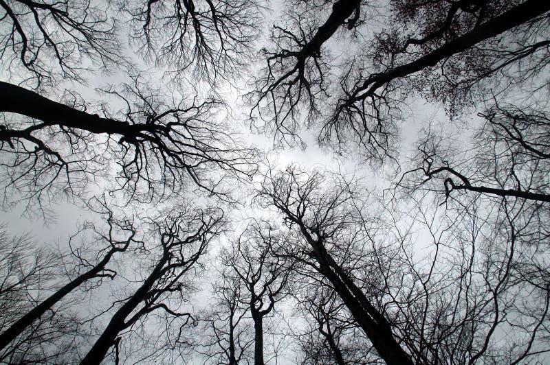 Coronas del árbol imagenes de archivo