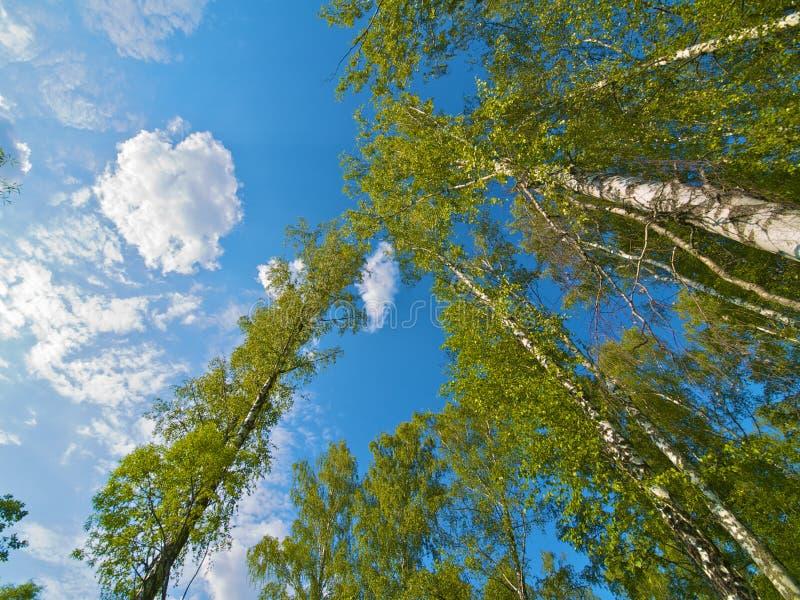 Coronas del árbol fotos de archivo