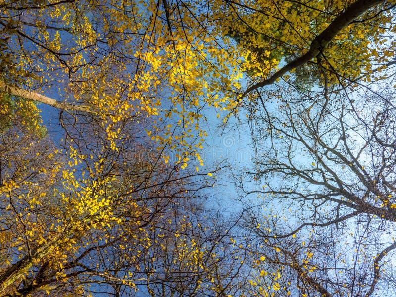 Coronas del árbol de la caída fotos de archivo