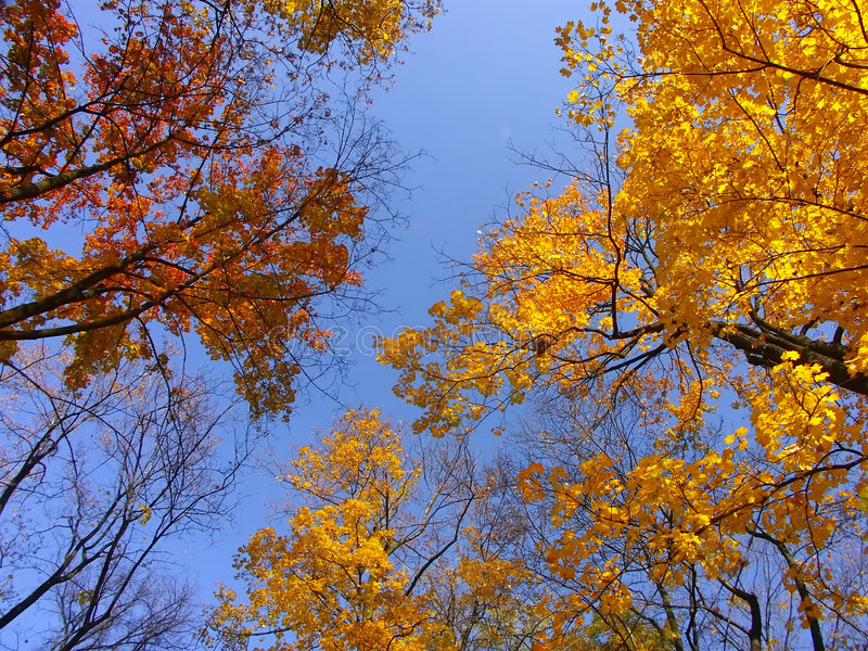 Coronas del árbol de la caída foto de archivo libre de regalías