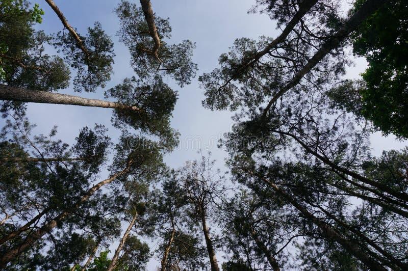 Corone dell'albero fotografia stock libera da diritti