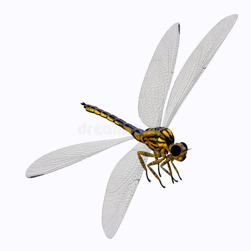 Corpo da libélula de Meganeura ilustração stock