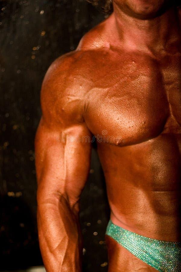 Corpo Del Body-builder Fotografie Stock Libere da Diritti