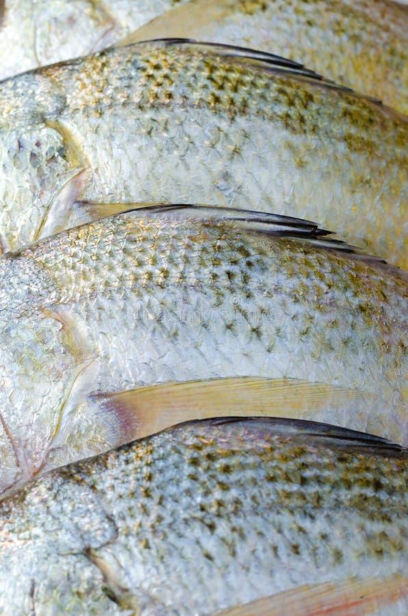 Corpo del pesce d'argento allineato di grugnito per cucinare fotografie stock