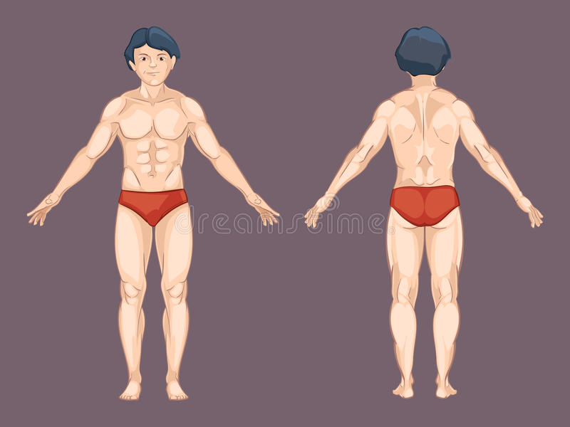 Corpo dell'uomo nella posa della parte posteriore e della parte anteriore Vettore royalty illustrazione gratis