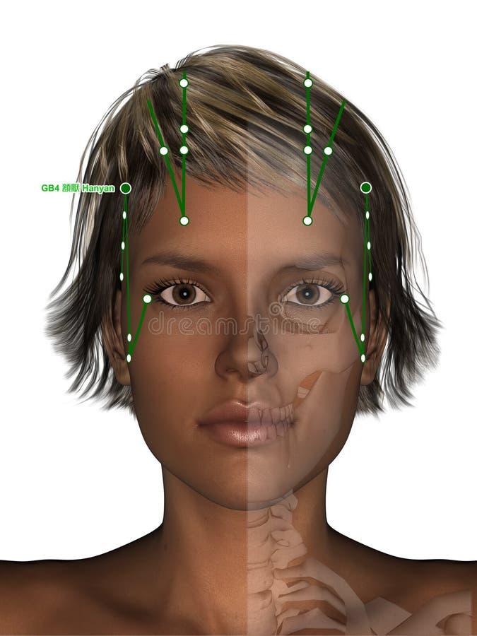 Corpo fêmea com esqueleto, ponto GB4 Hanyan da acupuntura, 3D Illu ilustração stock