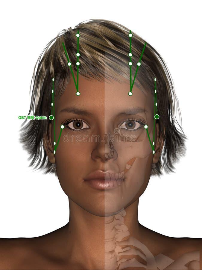 Corpo fêmea com esqueleto, ponto GB7 Qubin da acupuntura, 3D Illus ilustração stock