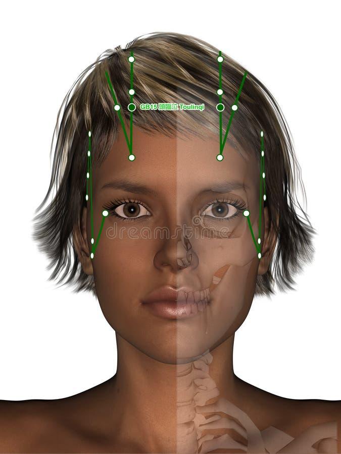 Corpo fêmea com esqueleto, ponto GB15 Toulinqi da acupuntura, 3D mim ilustração royalty free
