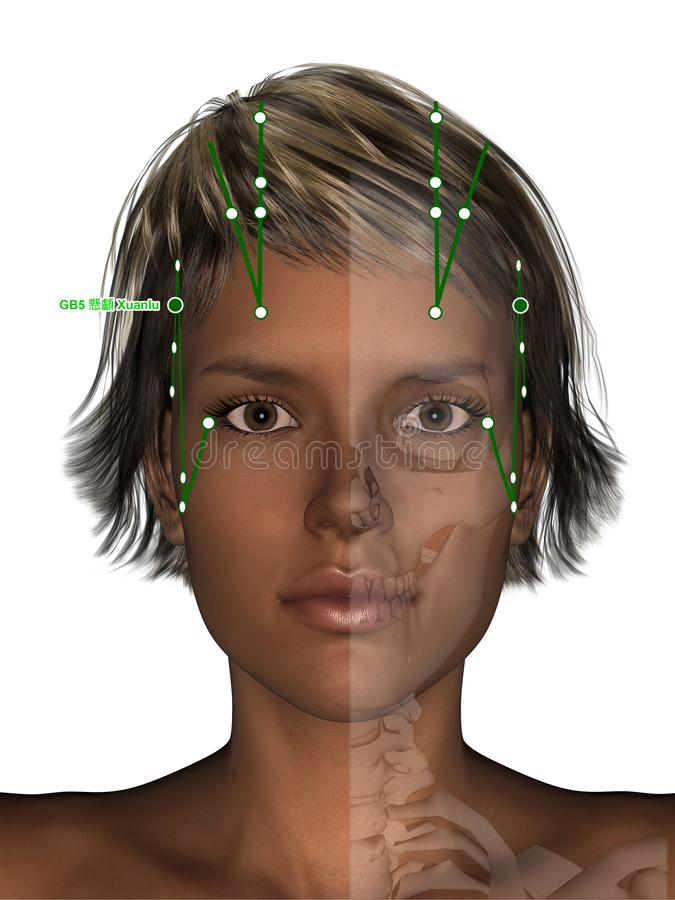 Corpo fêmea com esqueleto, ponto GB5 Xuanlu da acupuntura, 3D Illu ilustração do vetor