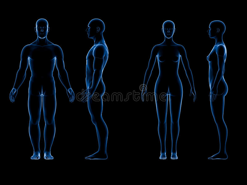 Corpo fêmea masculino humano de raio x Conceito da anatomia O isolado, 3d rende ilustração do vetor