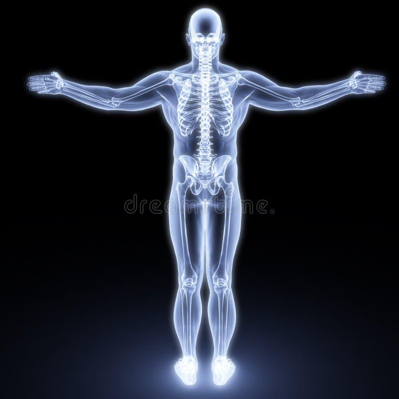 Corpo humano fotografia de stock