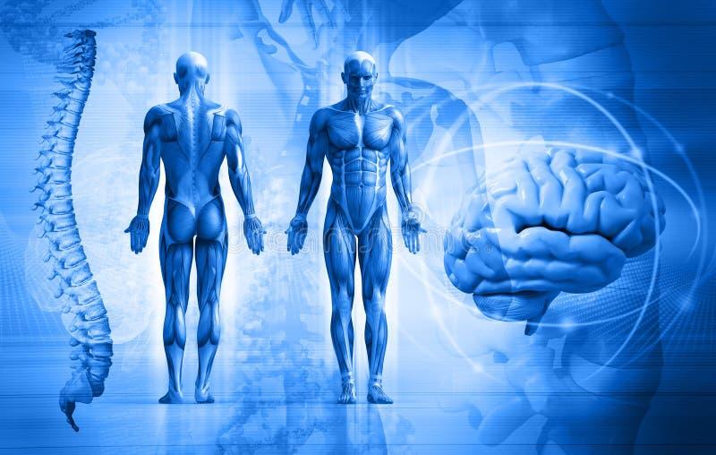 Corpo humano ilustração do vetor