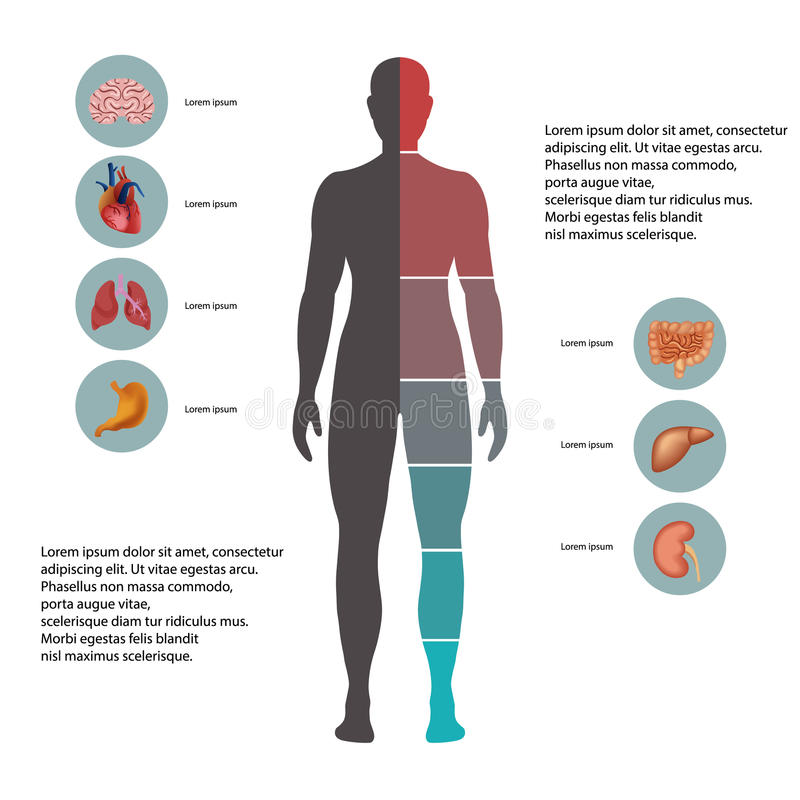 Corpo humano com ícones dos órgãos ilustração do vetor