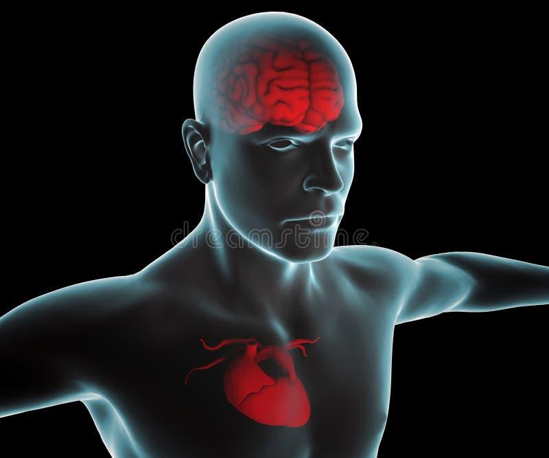 Corpo humano com raio X do coração e do cérebro