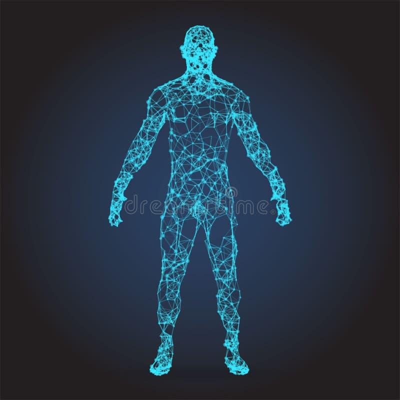 Corpo humano do baixo wireframe poli Ilustração abstrata fotos de stock royalty free