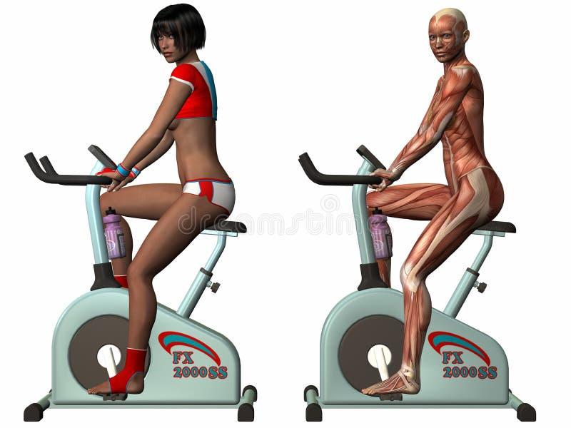 Corpo humano fêmea - bicicleta de exercício ilustração royalty free