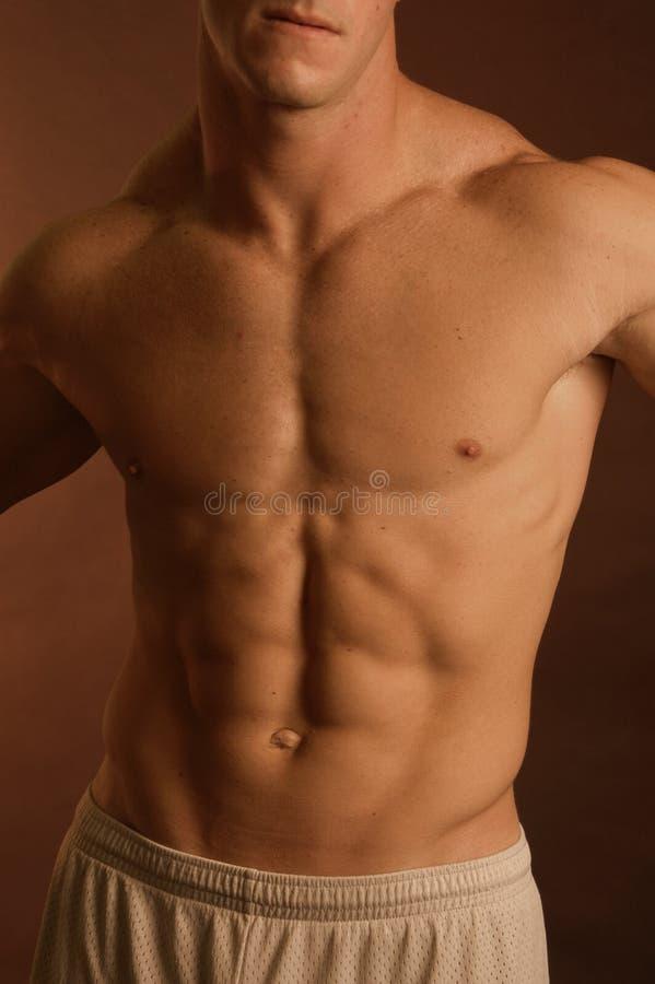 Corpo maschio fotografia stock libera da diritti