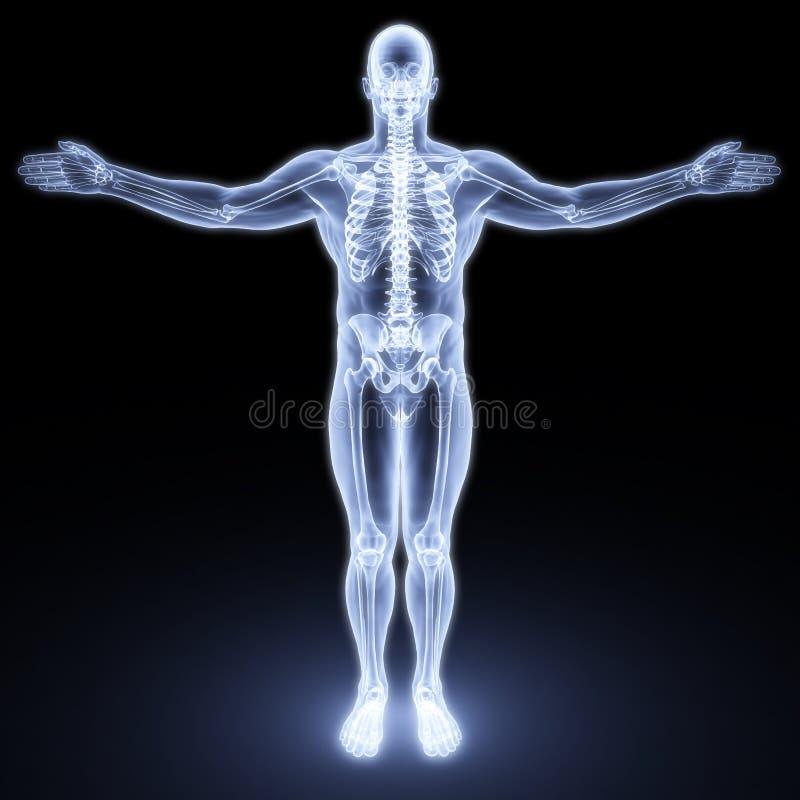 Corpo masculino ilustração royalty free