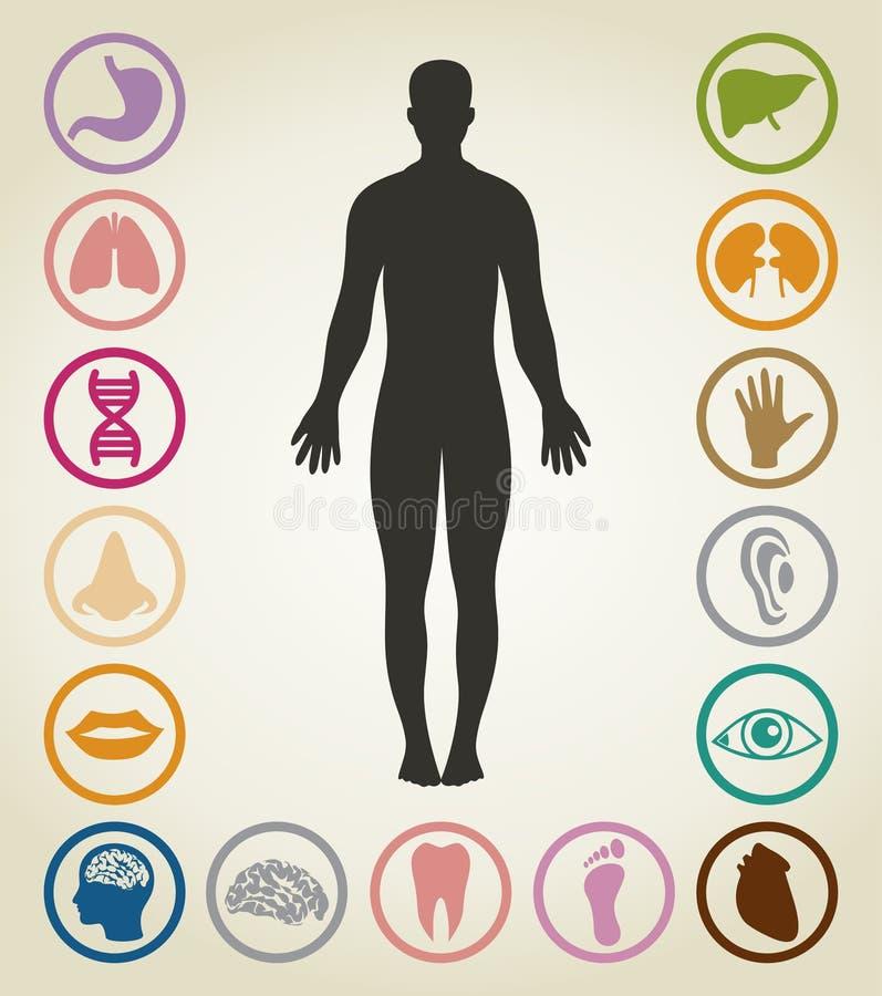 Corpos da pessoa ilustração stock