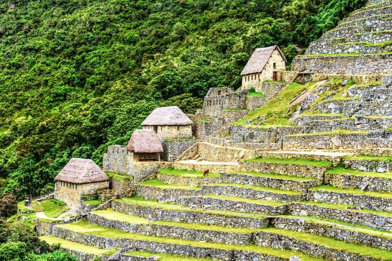 Corps de garde dans Machu Picchu, vallée sacrée, Pérou images stock
