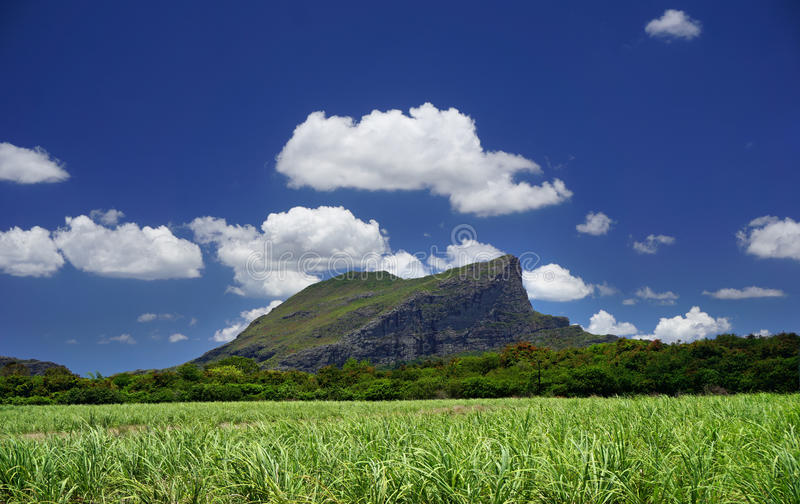 Corps de Garde Mountain Mauritius. With sugar cane field over blue sky royalty free stock photography