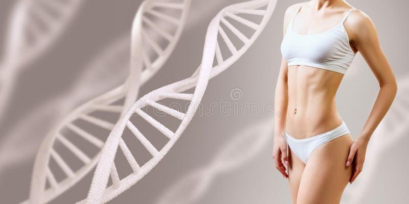 Corps féminin sportif parfait près des tiges d'ADN Bon concept de métabolisme images stock