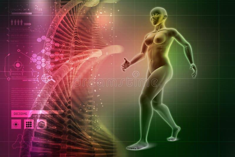 Corps humain de femelle de femme illustration de vecteur