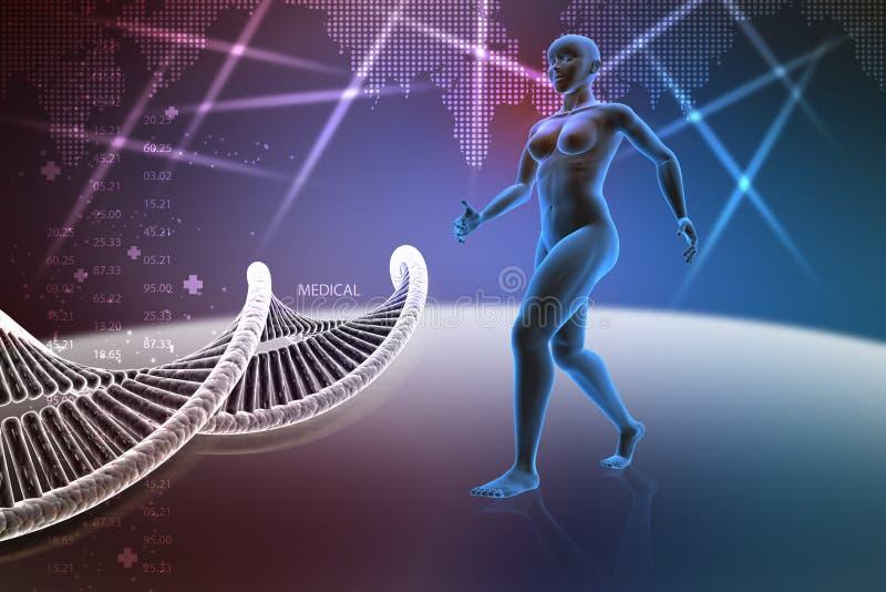 Corps humain féminin de femme avec de l'ADN illustration de vecteur