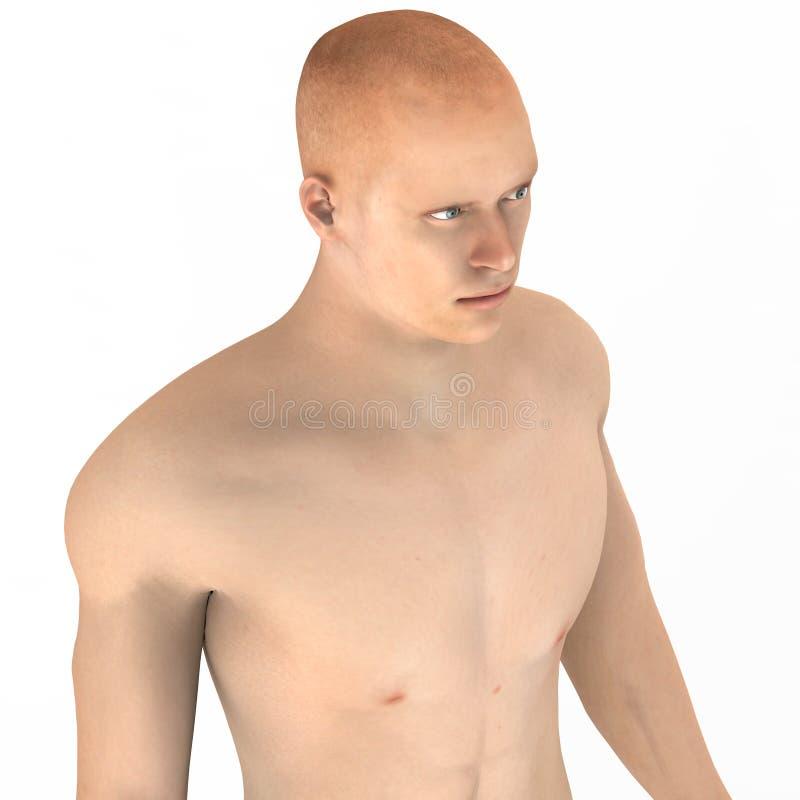 Corps masculin humain de muscle illustration de vecteur