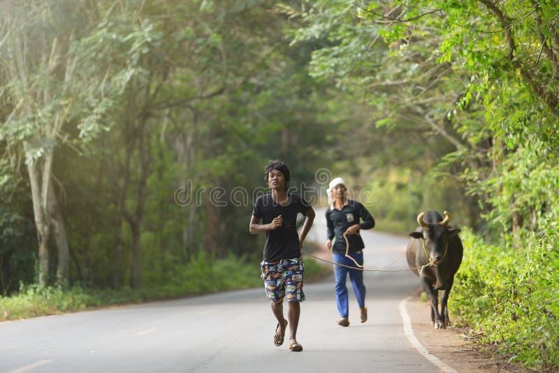 Corra con el toro que lucha foto de archivo