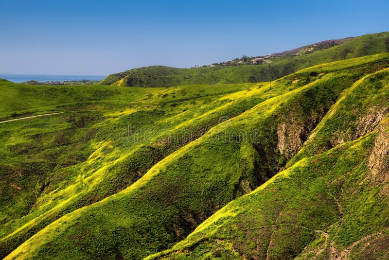 Corral Canyon Super Bloom. Vibrant yellow wildflowers covering Corral Canyon, Malibu, California in Spring 2019, four months after the Woolsey Fire of November stock photography