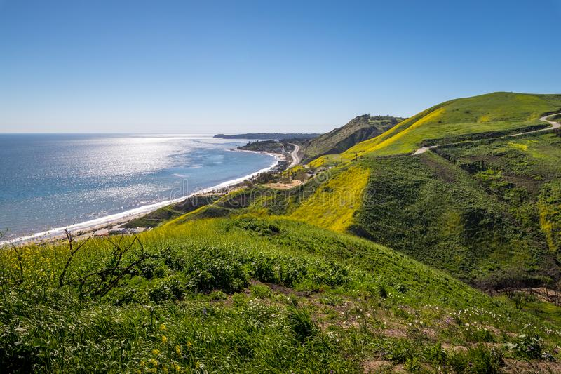 Corral Canyon Super Bloom. Vibrant yellow wildflowers covering Corral Canyon, Malibu, California in Spring 2019, four months after the Woolsey Fire of November royalty free stock photos