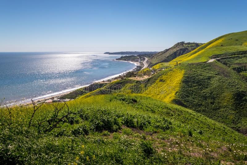 Corral Canyon Super Bloom. Vibrant yellow wildflowers covering Corral Canyon, Malibu, California in Spring 2019, four months after the Woolsey Fire of November royalty free stock images