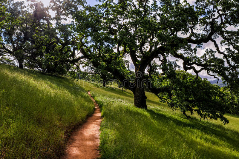 Corral Trail, Henry Coe State Park. The green grass and large oak trees along Corral Trail, Henry Coe State Park stock photos