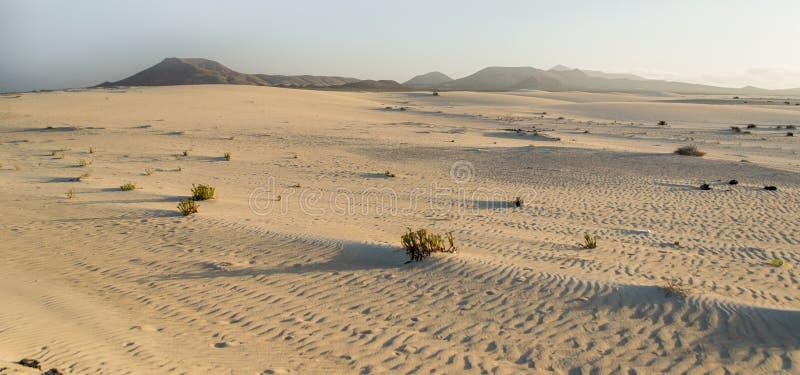 Corralejo沙子和沙丘在日落 免版税图库摄影