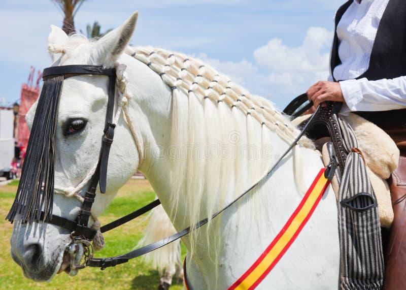 CORRALEJO, SPANIEN - 28. APRIL: Pferdenerscheinen lizenzfreies stockbild