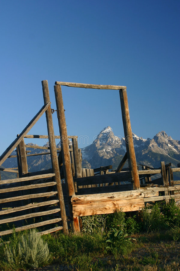corralled grand teton obraz royalty free