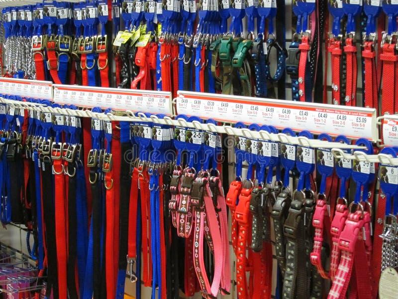 Correas de perro o ventajas. imagen de archivo libre de regalías