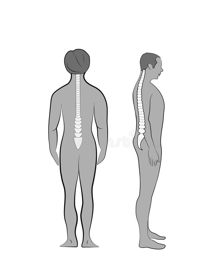 Correct alignment of human body in standing posture for good personality and healthy of spine and bone. Health care and medical il. Lustration vector illustration