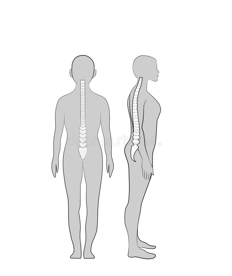Correct alignment of human body in standing posture for good personality and healthy of spine and bone. Health care and medical il. Lustration royalty free illustration