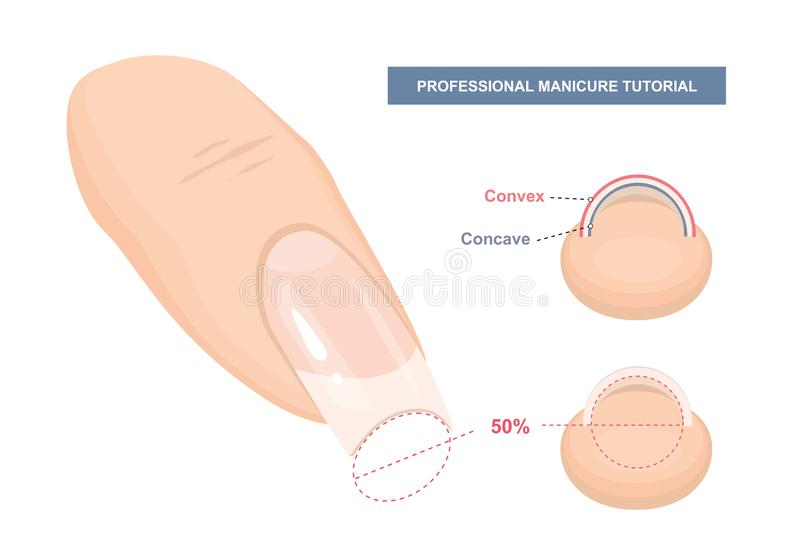 Correct C-curve. Manicure Tutorial. Nail Extension Guide. Tips and Tricks. Vector. Illustration royalty free illustration