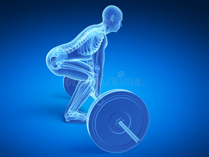 Correct lifting posture vector illustration
